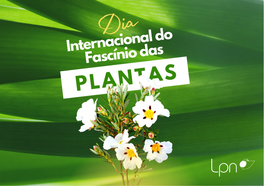 Webinar Series - International Plant Fascination Day